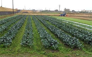 農業体験紹介のイメージ