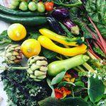 ファームベジコの野菜