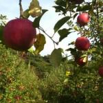 8月〜11月 収穫
