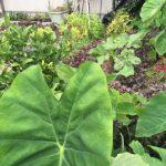 庭&ミニ菜園